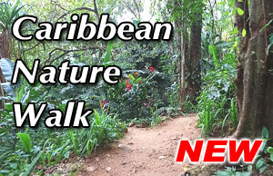 CARIBBEAN NATURE WALK 2